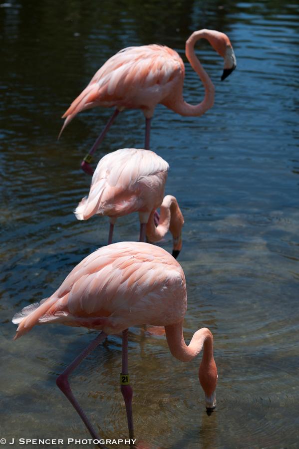 flamingo-0848