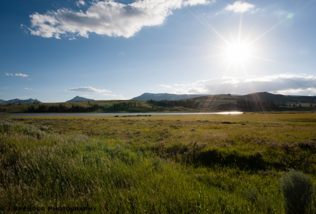 The meadows of Yellowstone