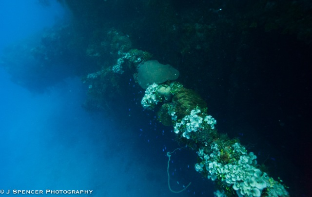 "Some sort of gun part, now full of coral ""flowers"", Yamagiri Maru"