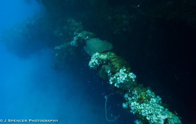 "Some sort of gun part, now full of coral ""flowers"", Yamagiri Maru"