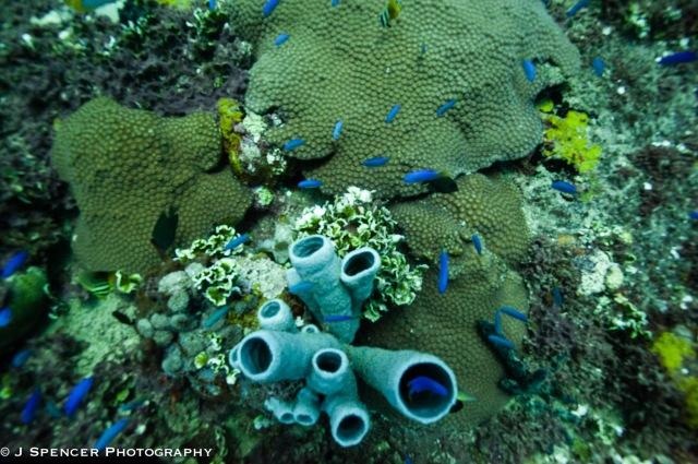 Corals on the hull of the Yamagiri Maru