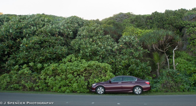 My rental car with the local flora