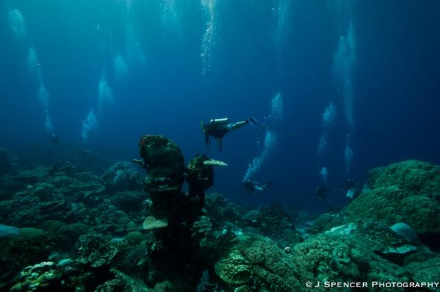 Kosrae coral garden