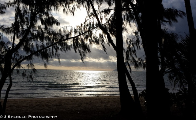 Eucalyptus at sunrise in Palm Cove